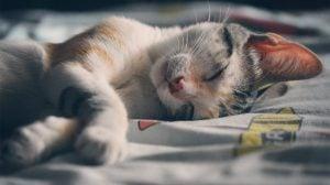 動物の平均睡眠時間ランキング