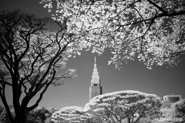 新宿御苑より ©石田研二