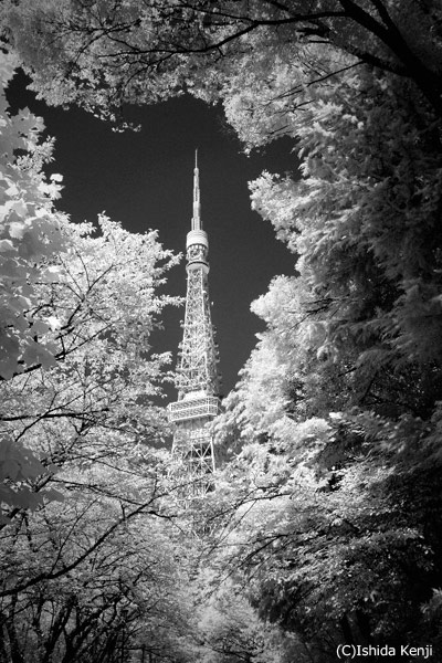 東京タワー ©石田研二