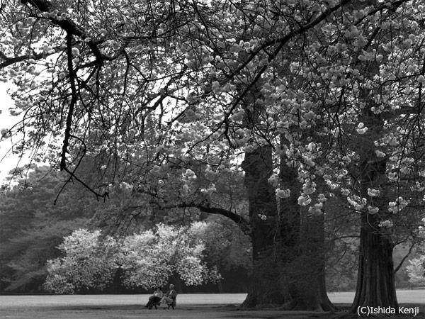 大きな公園の下で ©石田研二