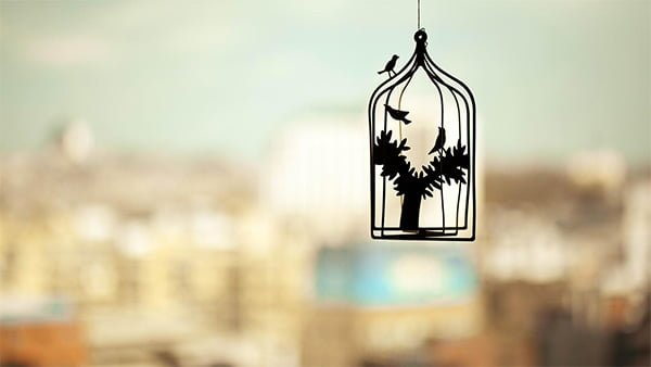 籠の中の鳥の壁紙