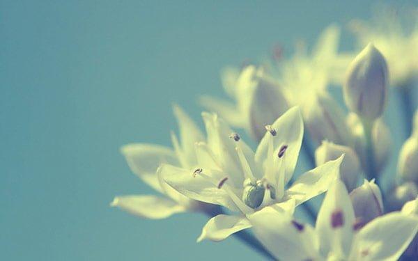 おしゃれな白い花の壁紙