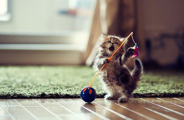 可愛いすぎる猫の写真