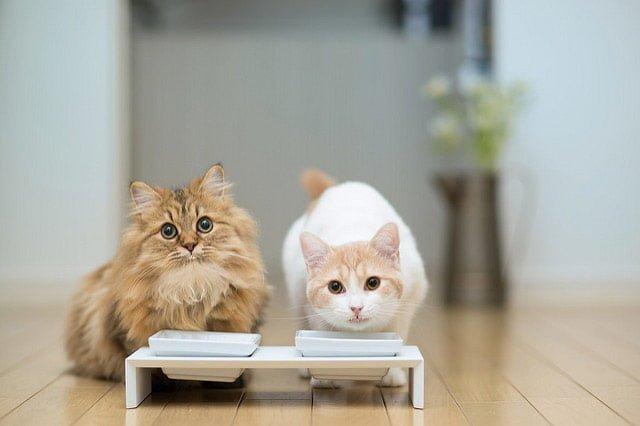 二匹の猫のを視線