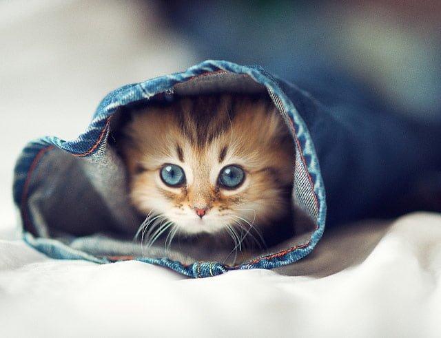 猫の瞳がたまらない画像