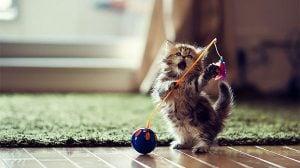 ネットでよく見かけるあの猫の写真は写真家BEN TORODEによるものだった