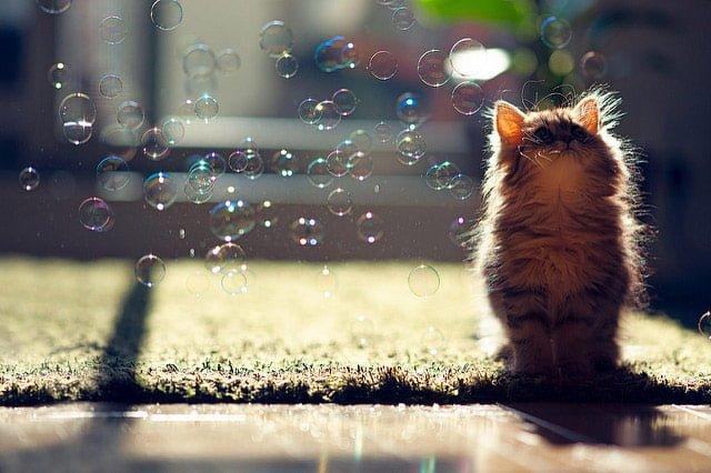 シャボン玉と猫の写真