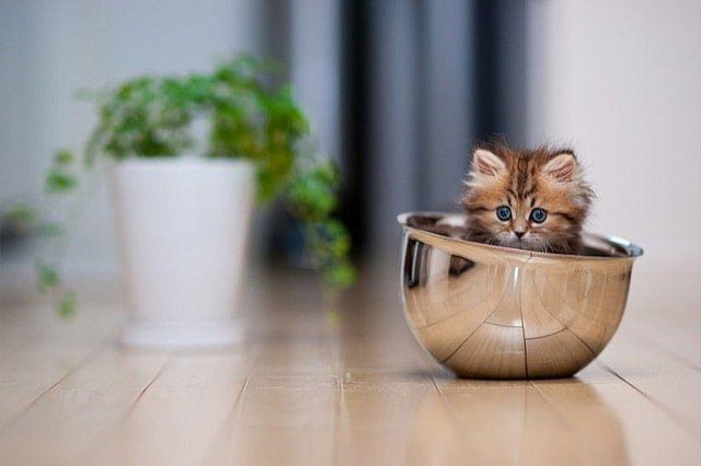 ボールに入った猫の写真