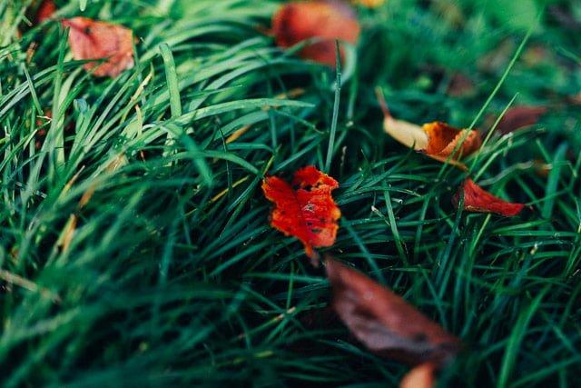 緑と交わった新宿御苑の紅葉