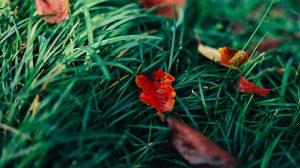 デートにおすすめ!新宿御苑の紅葉の見頃と見どころまとめ