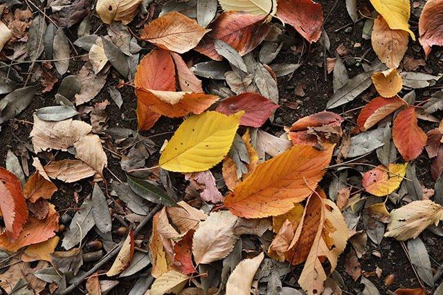 新宿御苑の紅葉・落ち葉